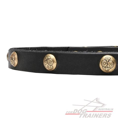 Leather Collar With Hello 20 Mm X 45 Cm looking for fashion collars get leather collar with brass studs