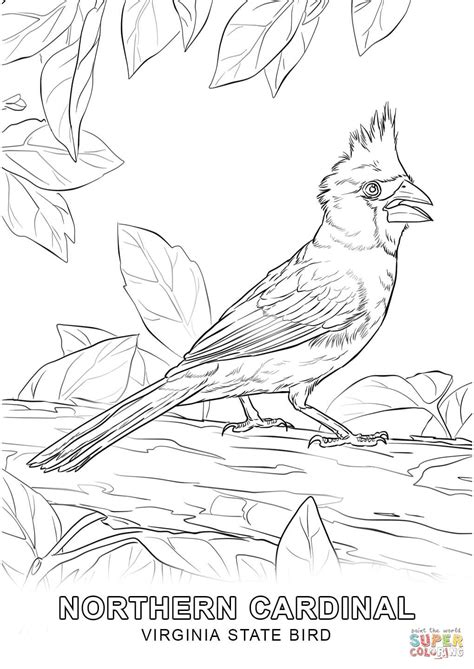 virginia state bird coloring page free printable