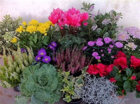 fiori da giardino autunnali fiori invernali da balcone piante da giardino fiori