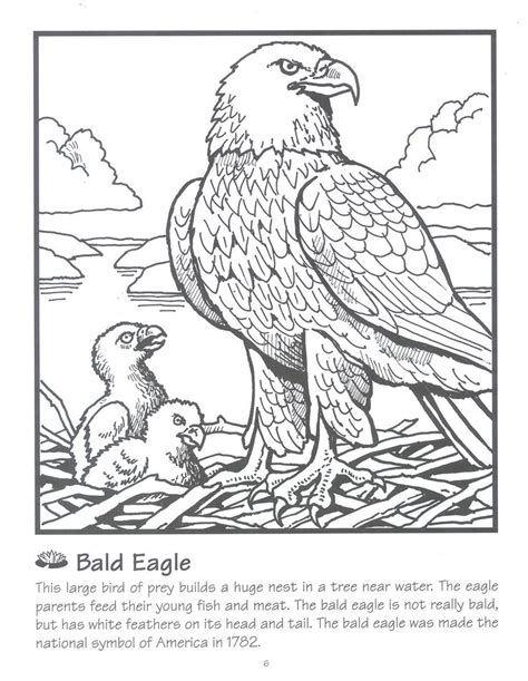 coloring page of an eagle s nest science facts about animals color sheets science pinterest