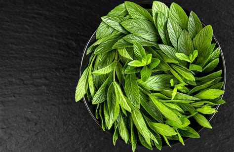 can dogs peppermint 5 herbs to reduce stress in your cat pawculture
