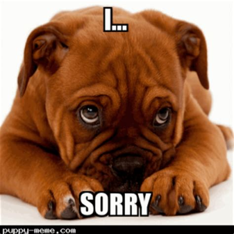 im sorry puppy the gallery for gt sorry puppy meme