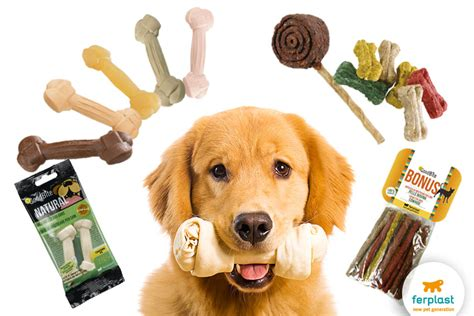 healthy snacks for dogs canine education when to reward a ferplast