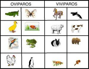imagenes de animales viviparos y oviparos whi