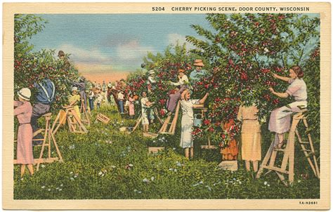Cherry Season Door County by Postcard America Curt Teich And The Imaging Of A Nation 1931 1950