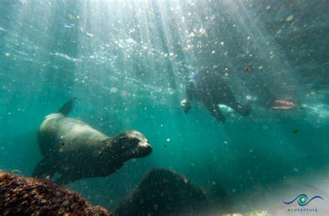 glass bottom boat galapagos mv origin galapagos cruise offers a glass bottom zodiac