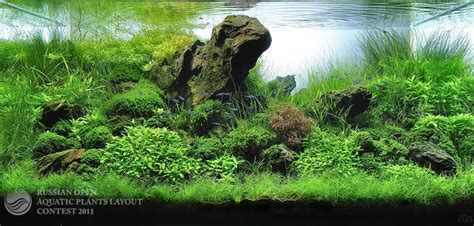 Aquascape Forum by Need Advice Aquascaping World Forum