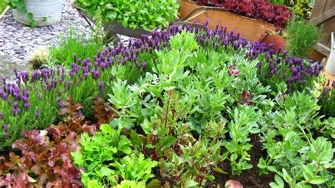 vegetable garden for beginners 10 tips to starting a vegetable garden for beginners the