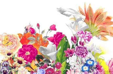manuale fiori di bach manuali 1 176 2 176 e 3 176 livello fiori di bach