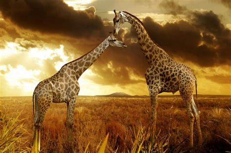 imagenes de paisajes salvajes im 225 genes de paisajes bonitos gratis con animales salvajes