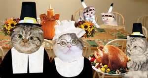 happy thanksgiving cats happy thanksgiving cats animal magnetism pinterest