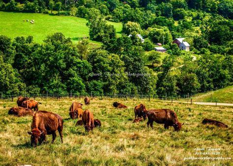 farm bureau boat insurance 17 best kate perrin farm bureau agent images on pinterest