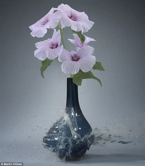 Orchids In Vases Martin Klimas Uses High Speed Photography To Captures The