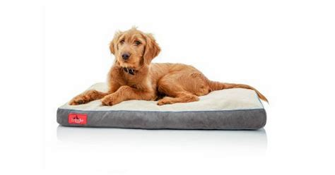 extra large dog bed top extra large dog beds with memory foam