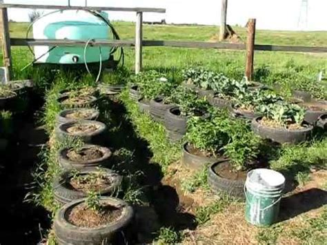 Tire Garden four weeks after planting   YouTube