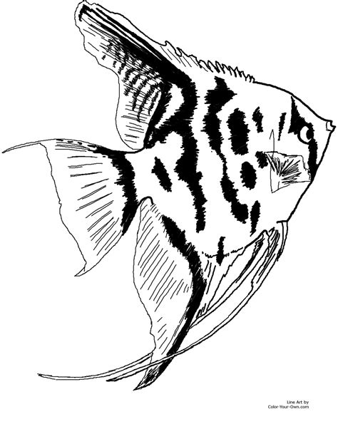 freshwater fish coloring pages depetta coloring pages 2018