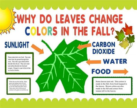 why do the leaves change color make a science fair project poster ideas why do leaves