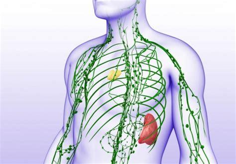 infiammazione vasi linfatici linfonodi