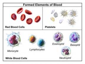 which blood component gives blood its color blood contents