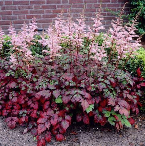 shade plants zone 5 best 25 shade perennials ideas on pinterest shade plants shade gardening guide
