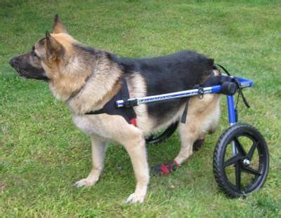 wheels for back legs help your with wheels back legs