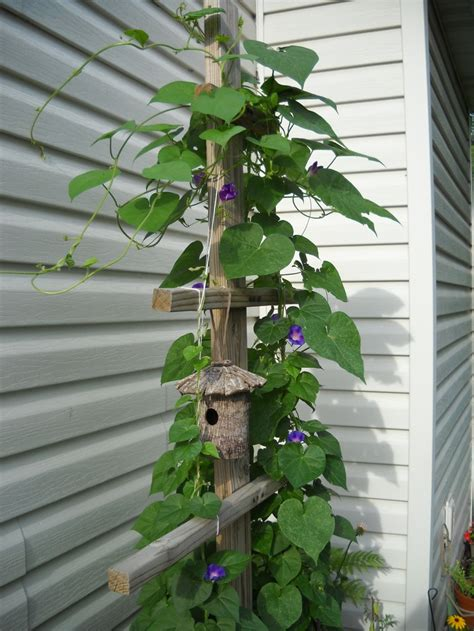 trellis climbing plants 10 best images about trellis for climbing plants on