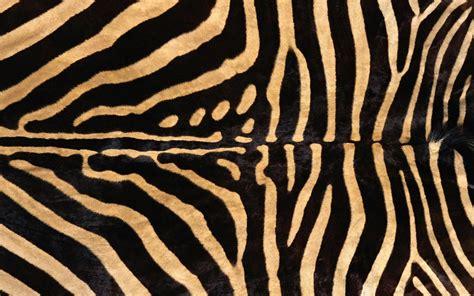 zebra pattern wall zebra skin texture