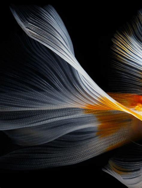 designboom photography still life fish photography by hiroshi iwasaki via