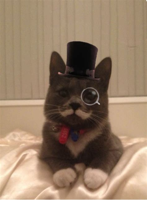 Top I Ll Even My Cat With You New that s purrfect m is for cats with moustaches