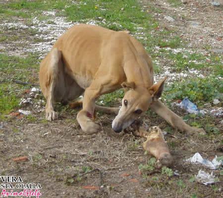 imagenes de animales fuertes ayudemos a los perros de la calle mascotas taringa