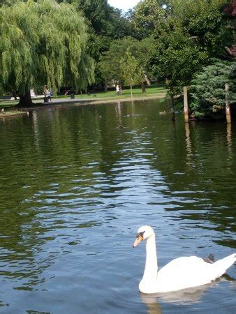 swan boats boston hours swan boats boston ma updated 2018 top tips before you