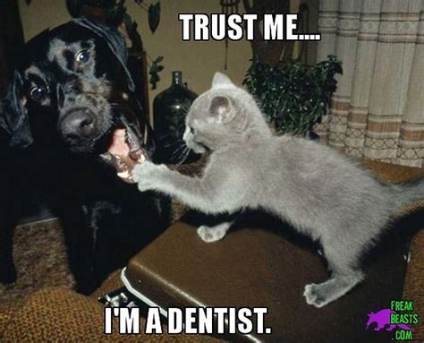 Dog Teeth Meme - 426 best dental humor images on pinterest teeth dental