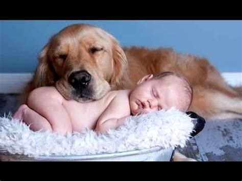 best dogs for babies best of cats and dogs babies compilation 2015 new
