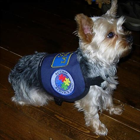 service for dogs small service vest official vest for small dogs