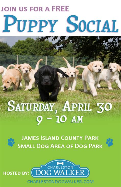 puppy and socialization join us for our puppy social charleston walker