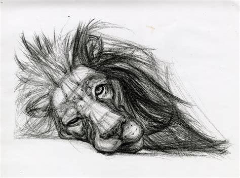 Drawings Of Animals by Giancanelli Animal Drawings