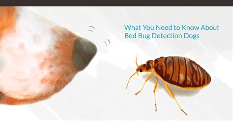 detecting bed bugs pest sniffing dogs how canines can help detect bed bugs