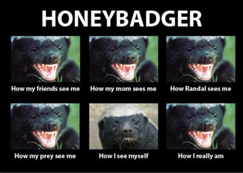 Honeybadger Meme - pass it on honey badger don t care hilarious daniel