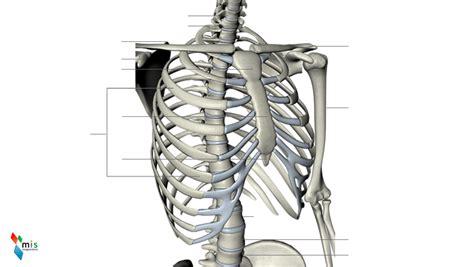 ossa della gabbia toracica gabbia toracica atlante anatomico immagine numero 37