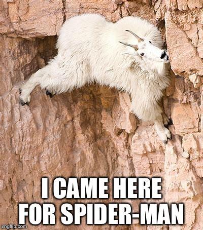 spider goat imgflip