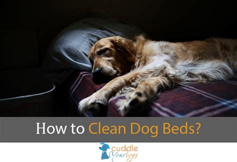 how to wash dog bed blog cuddle your dogs