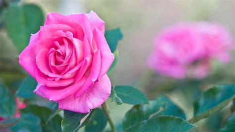 imagenes de flores wallpapers fondos de flores wallpapers hd gratis