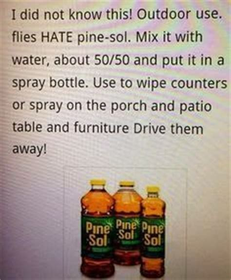 Get Rid Of Flies On Patio by 1000 Ideas About Fly Remedies On Fruit Flies