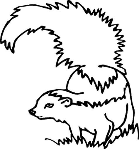 skunk coloring pages bestofcoloring com