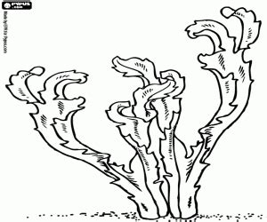 underwater plants coloring pages plants and leaves coloring pages printable games