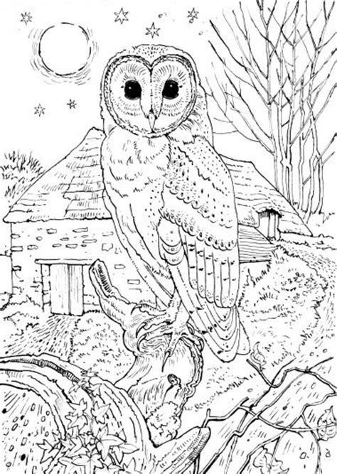 barn owl coloring book coloring pages