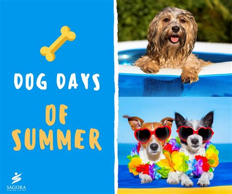 dogs days are days of summer sagora
