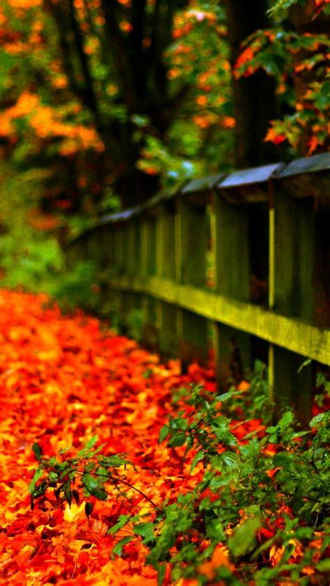 carpet  autumn leaves   park hd wallpaper