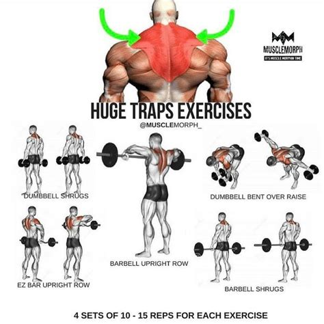 best 25 traps workout ideas on shoulder