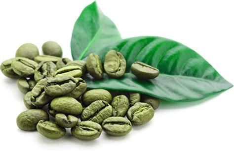 Coffee Green gcb70 fenfuro